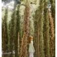 Discendenza diretta delle fiabe dell'Europa del nord, popolate folletti, elfi e fate dalle orecchie a punta, le immagini di Anni Leppälä evocano mondi lontani, facendo in qualche modo il verso al mezzo fotografico invece usato: laddove esso dovrebbe registrare fedelmente la realtà e porla tale e quale su carta, la […]